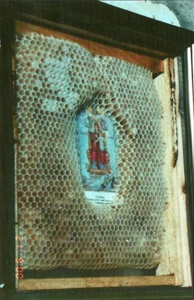 Albine-icoana-Maica-Domnului